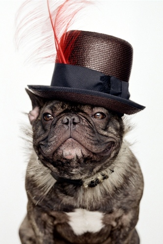 Marcel Nars Frenchie Wearing Hat