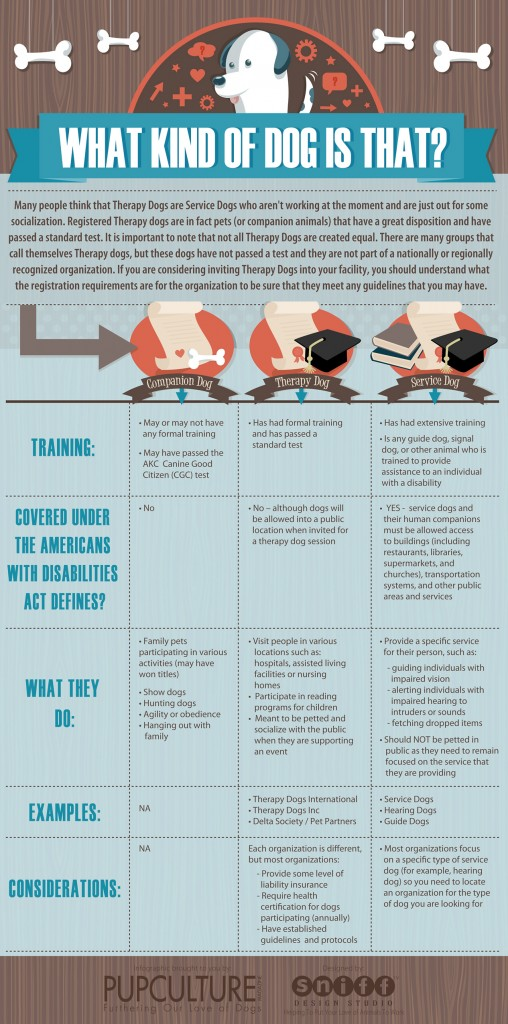 What kind of dog is that therapy dog infographic