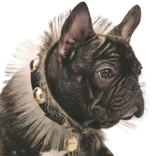 Marcel Nars French Bulldog