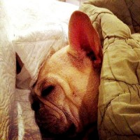 batpig hogs the pillows