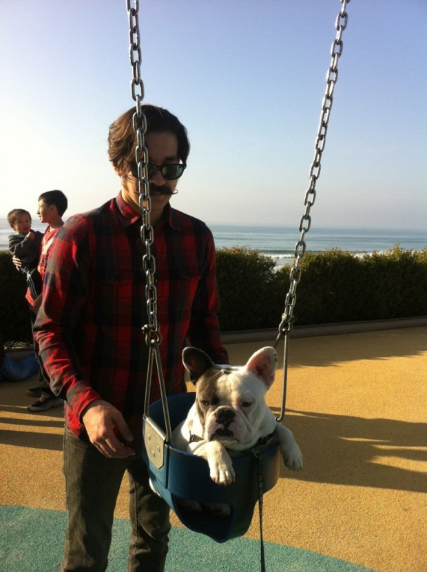 Boogaloo the Frenchie in a Baby Swing