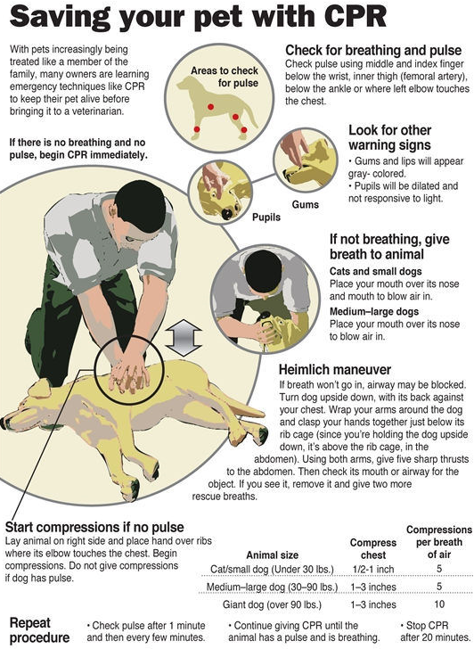 Pet, Dog or Cat CPR from the American Red Cross