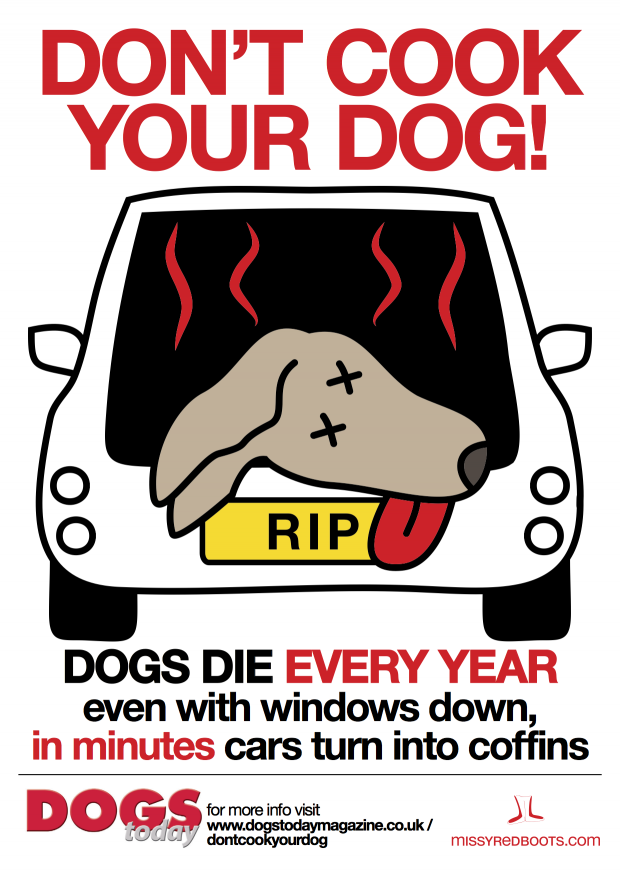 Don't Cook Your Dog
