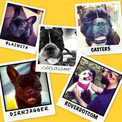 Five French Bulldog Polaroids