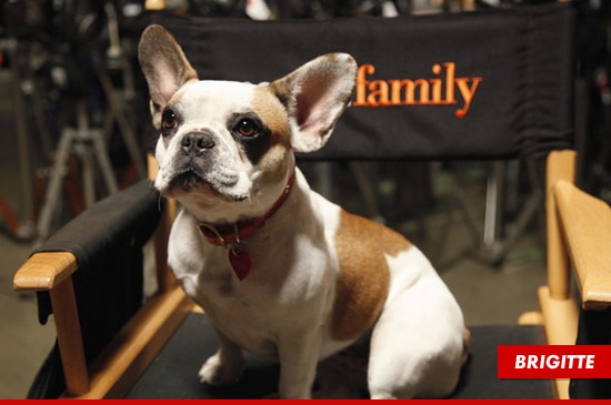 Brigitte the French Bulldog Stella on Modern Family