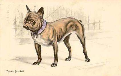 French Bulldog at Attention Postcard, 1911