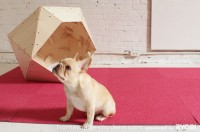 hmm_ep13_geometricdoghouse_option6