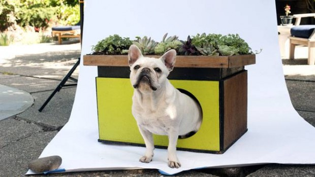 French Bulldog Hugo Eco Dog House