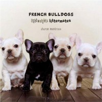 French Bulldogs Lightweights Littermates by Judith Choate