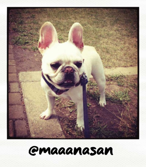 Maaanasan Frenchie Polaroid