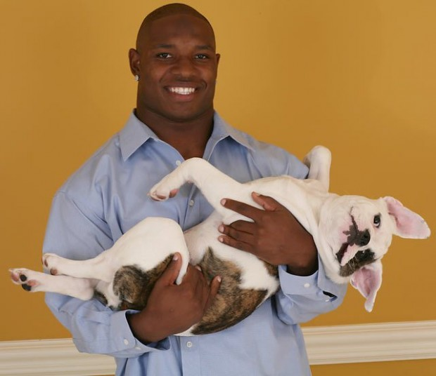Maurice Jones Drew French Bulldog