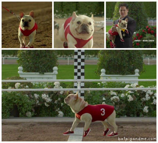 mr-quiggly-french-bulldog-montage