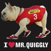 mrquiggly-french-bulldog-sketchers