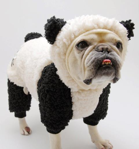 panda-frenchie