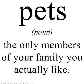 pets-noun
