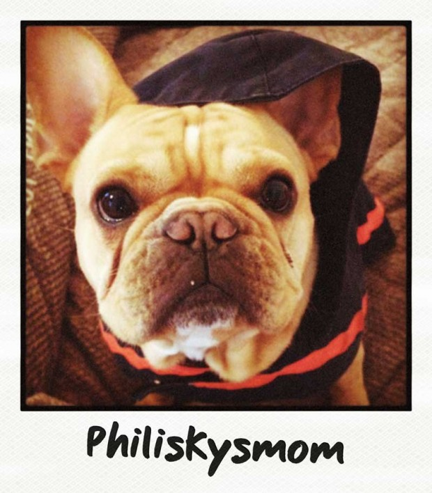 Phiiskysmom Frenchie Polaroid