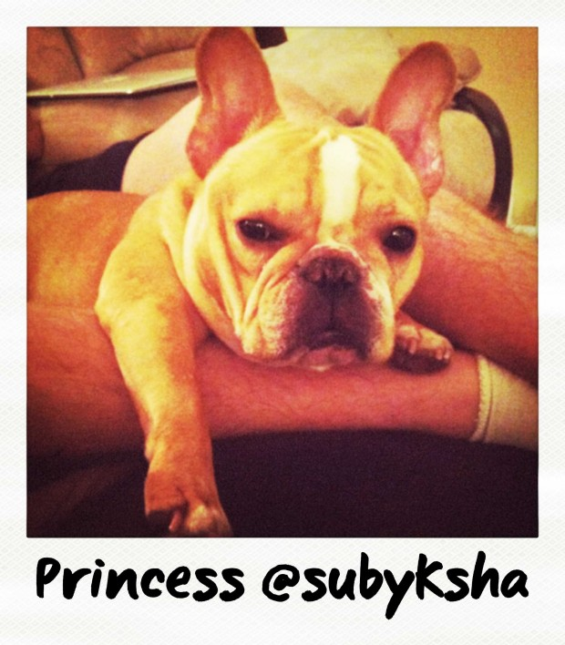 Princess the Frenchie by @Subyksha
