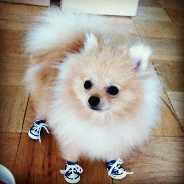 puff in shoes