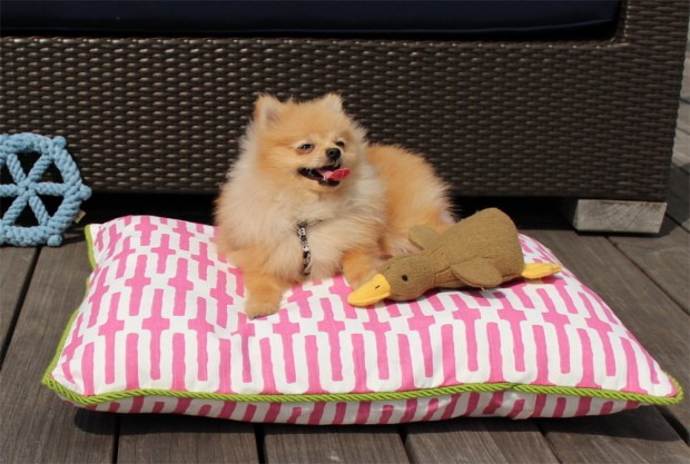 Puff the Pomeranian on his Pippa Print bed