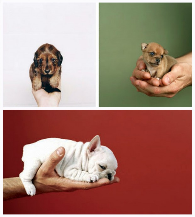 Puppies In Hand by Sharon Montrose