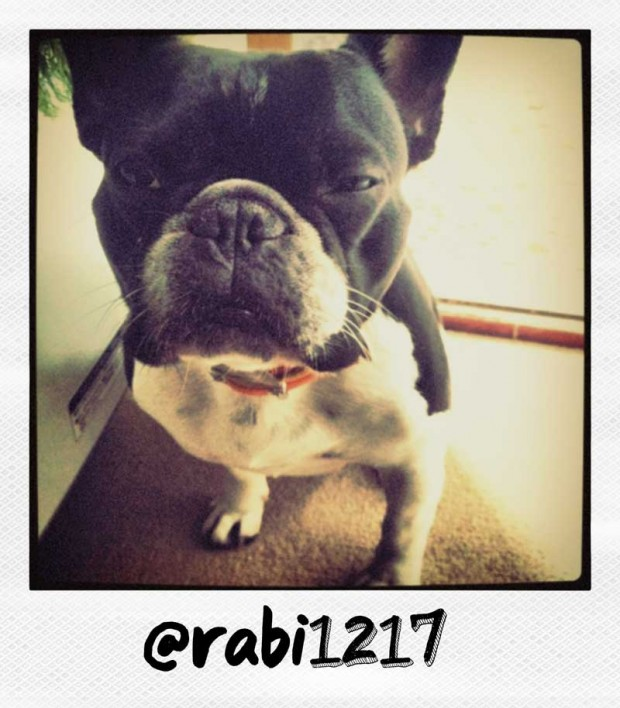 Rabi1217 French Bulldog Polaroid