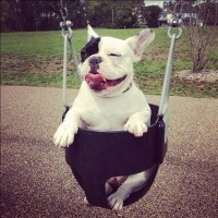 Rucca the Silly Frenchie