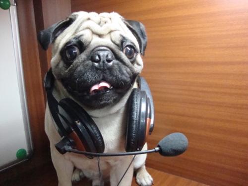 DJ Toyo Pug