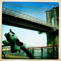 Puppy at Brooklyn Bridge