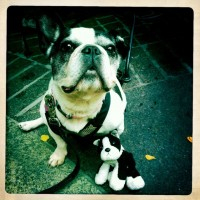 Puppy with Boopie